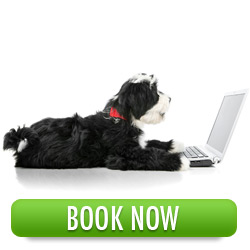 Book Now With The Dog Training Company