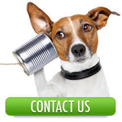 Contact The Dog Training Company
