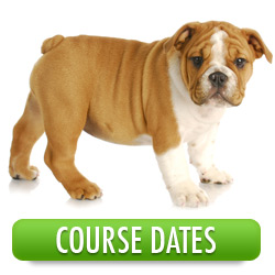 Course Dates For The Dog Training Company